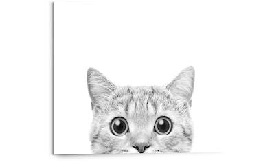 Reinders! Holzbild »Cat is Watching«, (1 St.) kaufen