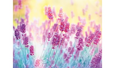 PAPERMOON Fototapete »Lavender Flower«, Vlies, in verschiedenen Größen kaufen