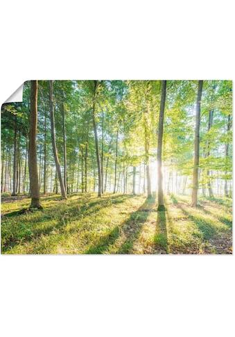 Artland Wandbild »Sonnenaufgang im Wald«, Wald, (1 St.), in vielen Größen &... kaufen