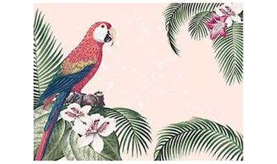 Contento Platzset »Dolonial Parrot«, (Set, 4 St.), für innen und außen geeignet,... kaufen