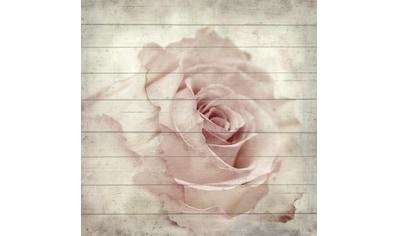 Home affaire Holzbild »Rose seitliche«, 40/40 cm kaufen