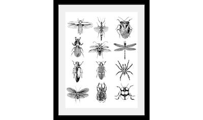 queence Bild »Insekten« kaufen