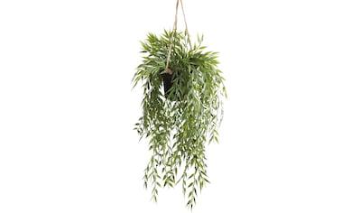 Botanic-Haus Künstliche Zimmerpflanze »Bambus-Hängeampel« kaufen