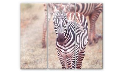 Wall-Art Mehrteilige Bilder »Zebra Fohlen Pferd (3-teilig)«, (Set, 3 St.) kaufen