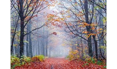 Papermoon Fototapete »Foggy Autumn Forest Road« kaufen