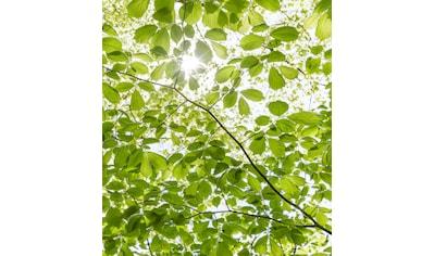 KOMAR Fototapete »Im Frühlingswald«, Bahnbreite: 50 cm; Motiv bestehend aus mehreren Bahnen kaufen