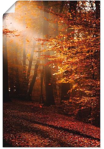 Artland Wandbild »Sonnenaufgang im Herbst«, Wald, (1 St.), in vielen Größen &... kaufen