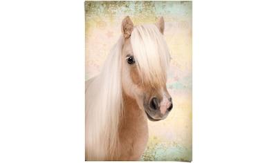 Reinders! Poster »Pony Liebe«, (1 St.) kaufen