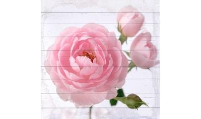 QUEENCE Holzbild »Pinke Blüte«, 40x40 cm Echtholz kaufen