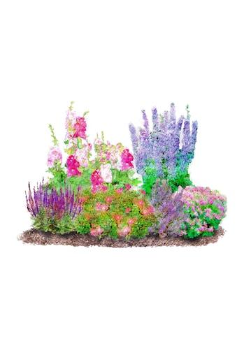 Pflanzenset »Romantischer Garten«, 6 Pflanzen kaufen