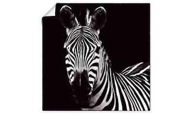 Artland Wandbild »Zebra II« kaufen