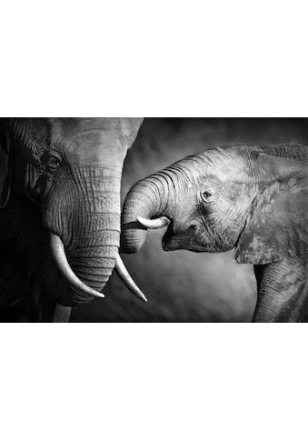 Leinwandbild »Elefant« kaufen