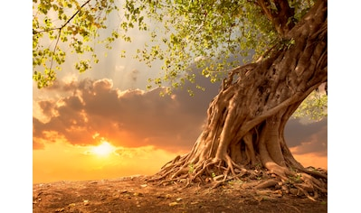 Papermoon Fototapete »Old Tree in Sunset« kaufen