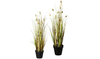Creativ green Kunstgras »Lagurusgrasbusch« (Set, 2 Stück) kaufen