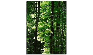 Artland Glasbild »Im Buchenwald«, Wald, (1 St.) kaufen
