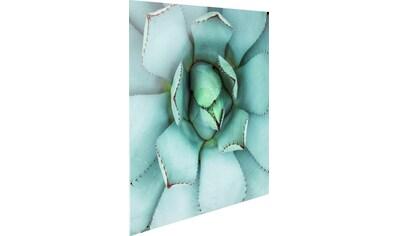 Reinders! Glasbild »Agave Herz« kaufen