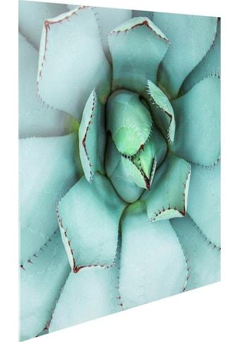 Glasbild »Agave Herz« kaufen