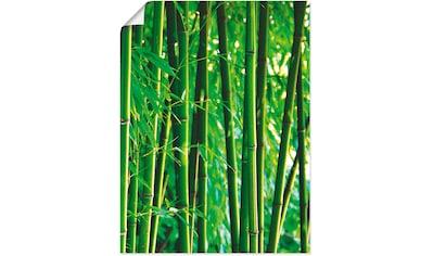 Artland Wandbild »Bambus III«, Gräser, (1 St.), in vielen Größen & Produktarten... kaufen
