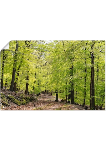 Artland Wandbild »Die Buchen im Frühling«, Wald, (1 St.), in vielen Größen &... kaufen