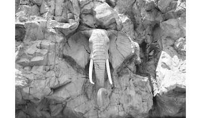 CONSALNET Fototapete »Elefant im Felsen«, Vlies, in verschiedenen Größen kaufen