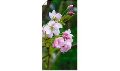 Artland Wandbild »Zweig einer blühenden Zierkirsche«, Bäume, (1 St.), in vielen Größen... kaufen