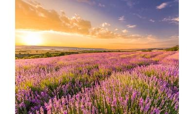 Papermoon Fototapete »Lavender Field« kaufen