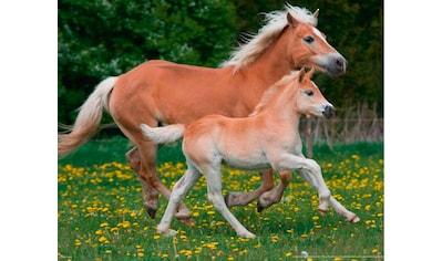 Papermoon Fototapete »Horses« kaufen