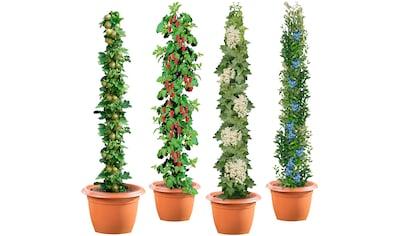 Säulenobst »4er - Set«, Weiße Johannisbeere,Grüne Stachelbeere,Himbeere,Heidelbeere kaufen