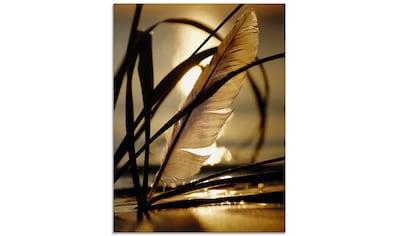 Artland Glasbild »Feder im Abendlicht«, Gräser, (1 St.) kaufen