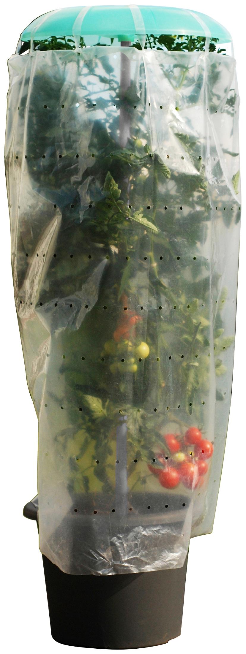 KHW Pflanzenschutzdach Tomatenhut, inkl. Stab und Schutzfolie, BxH: 49x120 cm grün Zubehör Pflanzen Garten Balkon