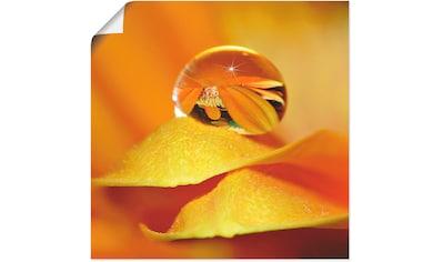 Artland Wandbild »Wassertropfen II«, Blätter, (1 St.), in vielen Größen & Produktarten... kaufen