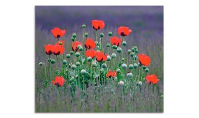 """Artland Küchenrückwand """"Lavendelfarm in Sequim  -  Mohnblumen"""", (1 - tlg.) kaufen"""