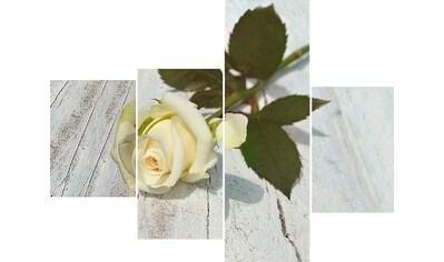 Home affaire Wandbild »RUMIN / Weiße Rose« kaufen
