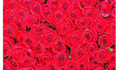 living walls Fototapete »rote Rosen«, 400 x 250 cm kaufen