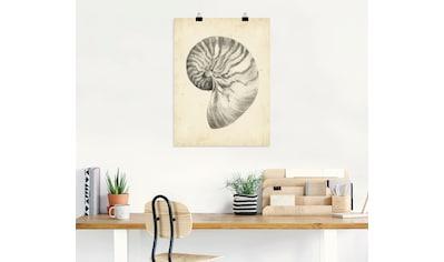 Artland Wandbild »Antike Muschel Lehre I« kaufen