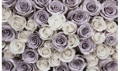 CONSALNET Fototapete »Blumen Rosen«, Vlies, in verschiedenen Größen kaufen