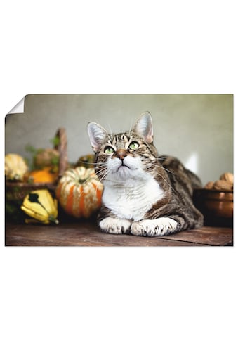 Artland Wandbild »Katze und Herbstdeko« kaufen
