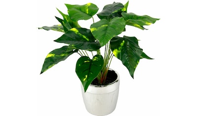I.GE.A. Kunstpflanze »Pothospflanze im Topf« (1 Stück) kaufen