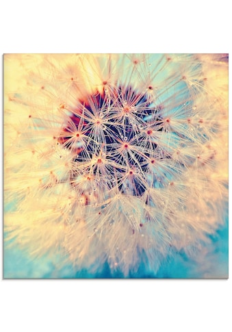 Artland Glasbild »Pusteblume ganz nah«, Blumen, (1 St.) kaufen