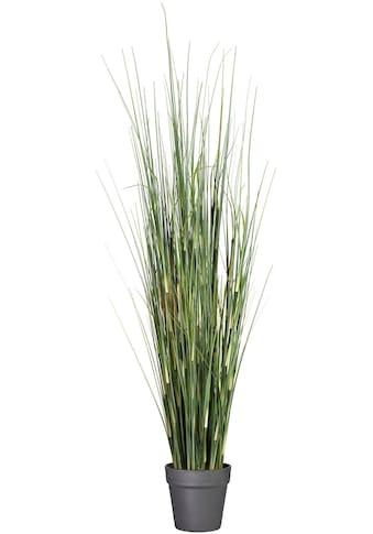 Creativ green Kunstgras »Equisetumgras« (1 Stück) kaufen