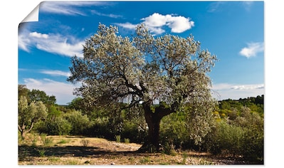 Artland Wandbild »Olivenbaum in Südfrankreich« kaufen
