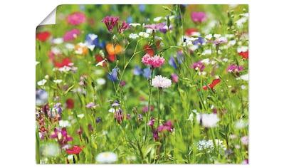 Artland Wandbild »Blumenwiese I«, Blumenwiese, (1 St.), in vielen Größen & Produktarten -Leinwandbild, Poster, Wandaufkleber / Wandtattoo auch für Badezimmer geeignet kaufen