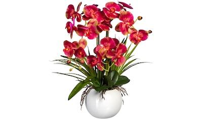 Creativ green Kunstorchidee »Phalaenopsis«, im Keramiktopf kaufen