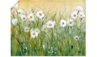 Artland Wandbild »Gänseblümchenfrühling II«, Blumen, (1 St.), in vielen Größen & Produktarten - Alubild / Outdoorbild für den Außenbereich, Leinwandbild, Poster, Wandaufkleber / Wandtattoo auch für Badezimmer geeignet kaufen