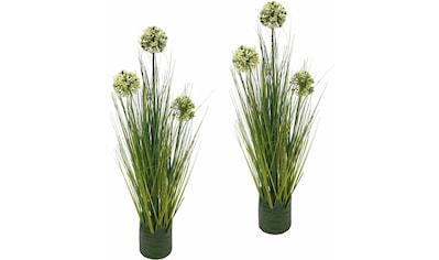 I.GE.A. Kunstpflanze »Grasbusch Allium 62 cm«« (Set, 2 Stück) kaufen
