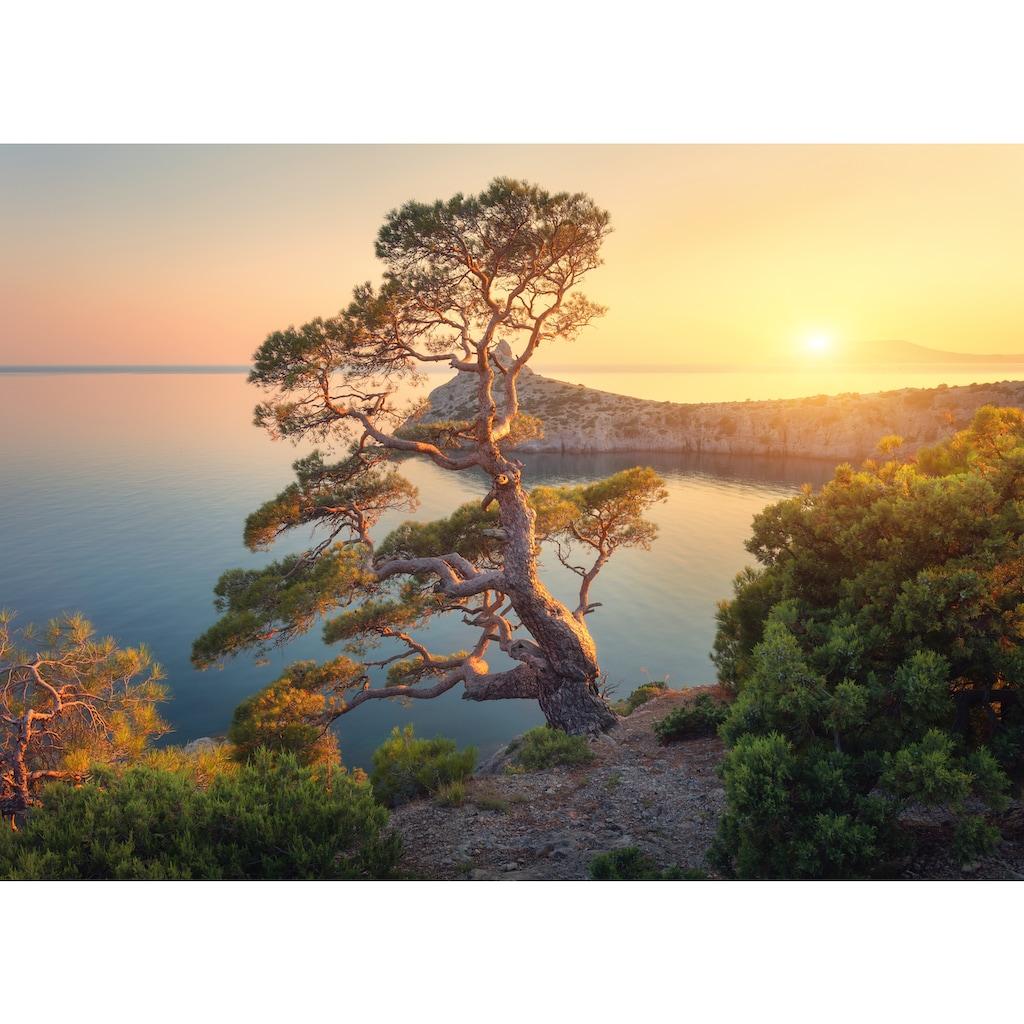 Papermoon Fototapete »Tree Mountain Sunset«