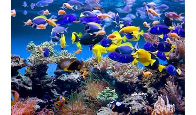 PAPERMOON Fototapete »Aquarium«, Vlies, in verschiedenen Größen kaufen