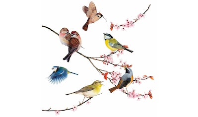Komar Fensterbild »Vögel«, 31x31 cm, selbsthaftend kaufen