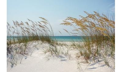 Papermoon Fototapete »Ocean Beach Dunes«, Vliestapete, hochwertiger Digitaldruck kaufen