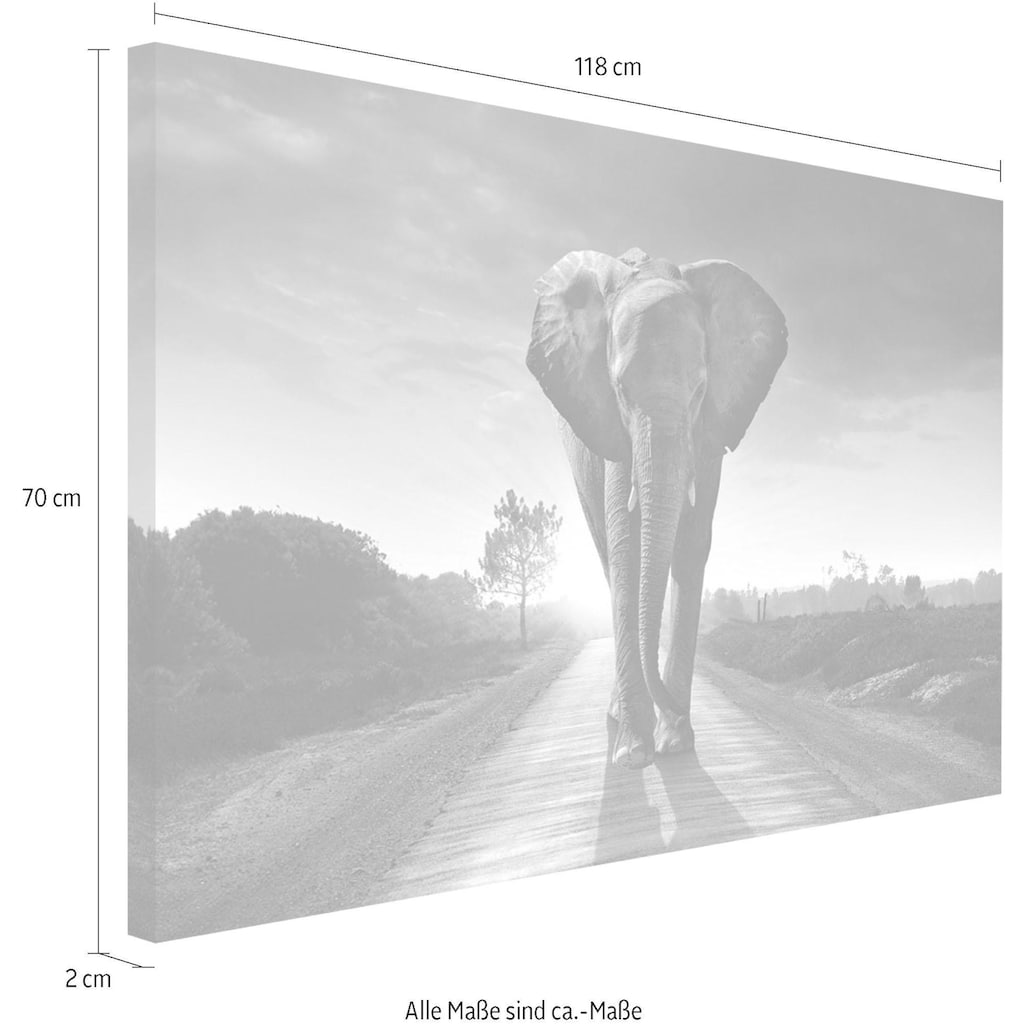 Reinders! Wandbild »Elefant König«